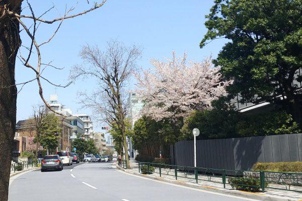 minamiaoyama